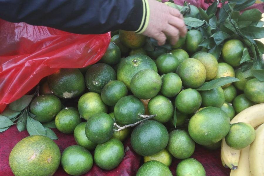砂糖橘10元4斤叫卖语音